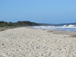 photograph of beach scene