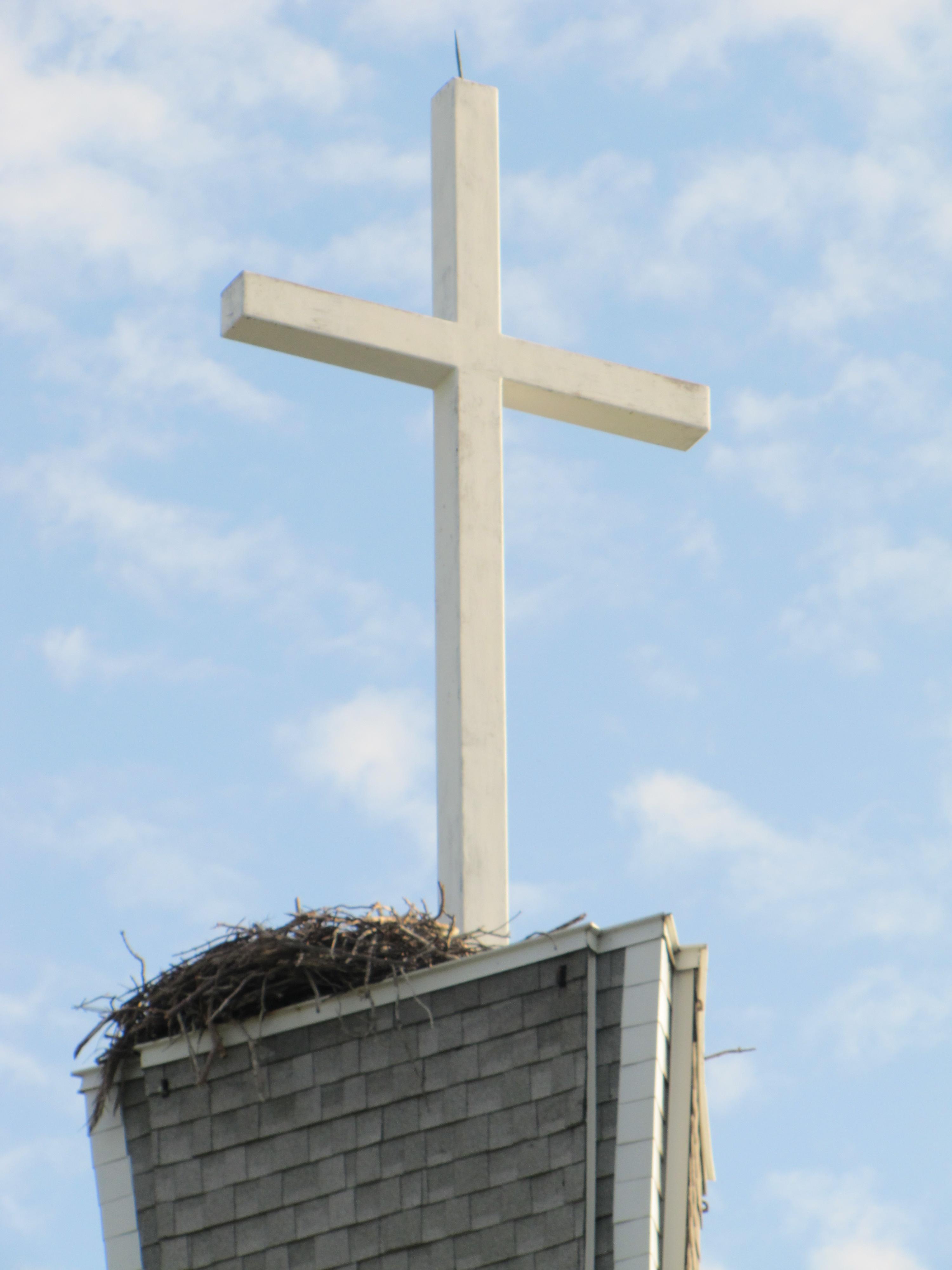 osprey nest atop steeple of gloria dei luthern church on anna maria island florida